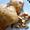 Walnut Spice Financiers (Friands) mini cakes