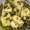 Marinated Artichoke Hearts | Carciofi Alla Romana