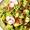 Spinach Pesto Potato Salad with Bacon