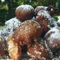 Lemony Guava Beignets w/ Raw Honey Drizzles