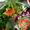 Vegetable salads in Chennai | Best Healthy Salad T.Nagar