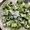 Rigatoni with Kale, Walnuts and Halloumi Recipe