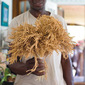 Growing Rice In The Hudson Valley - New Article