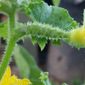 Can You Name this Vegetable?
